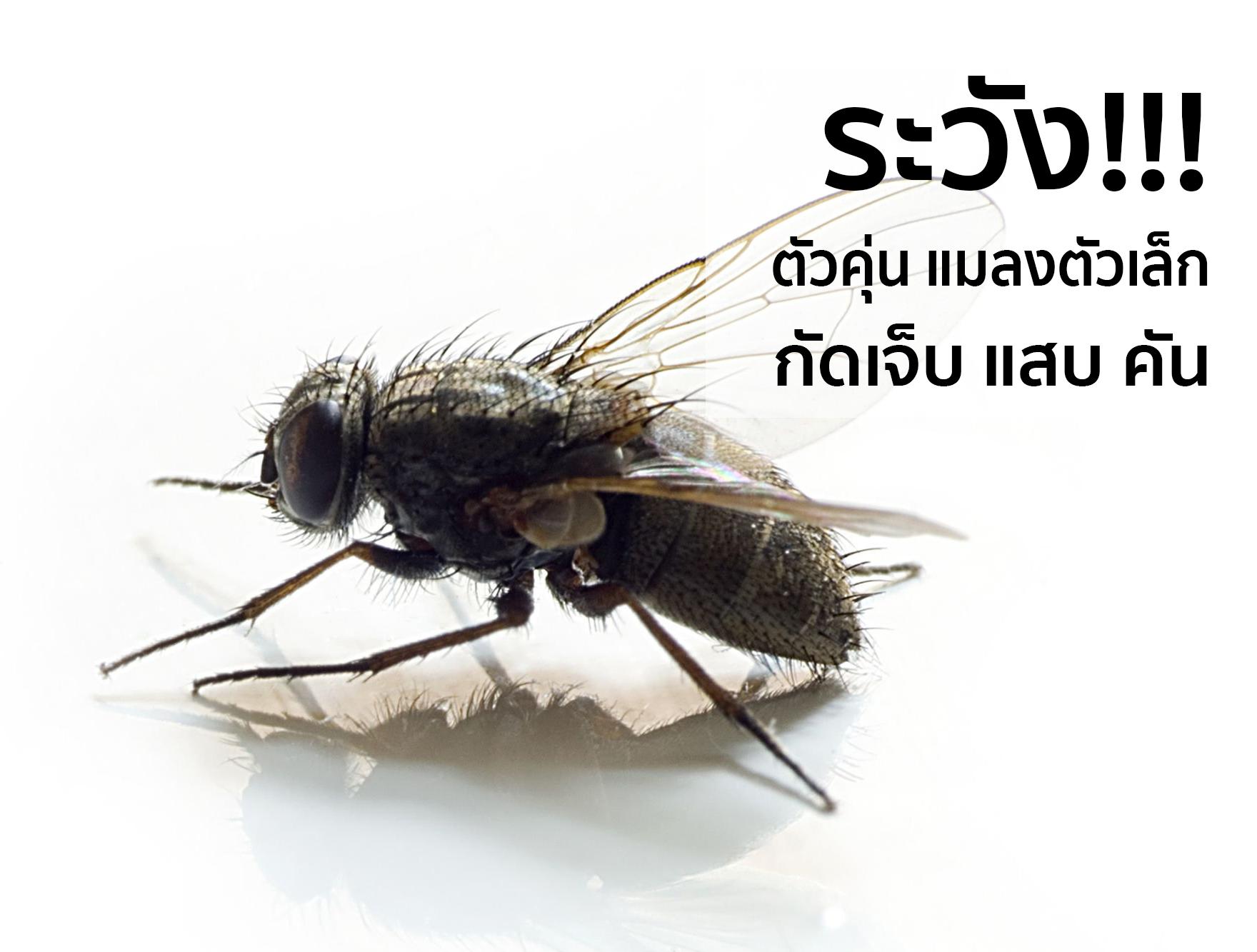 """ตัวคุ่น  หรือ """"ริ้นดํา"""" (Black flies) EP3"""